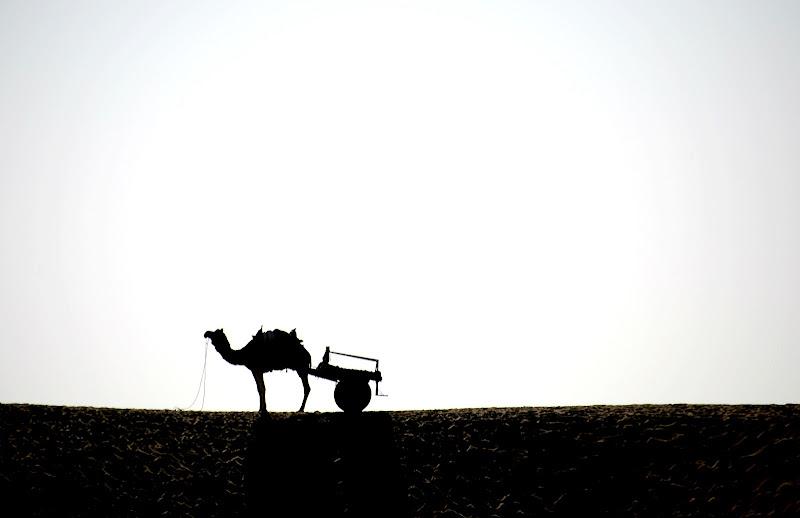It must be a Camel (F.Zappa) di Migliu