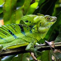 Reptiles of Costa Rica