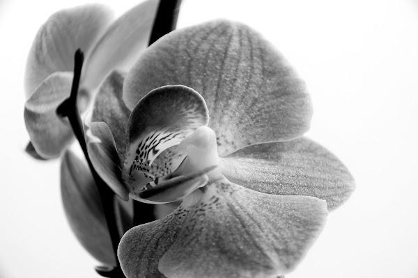 orchidea di Roberto58