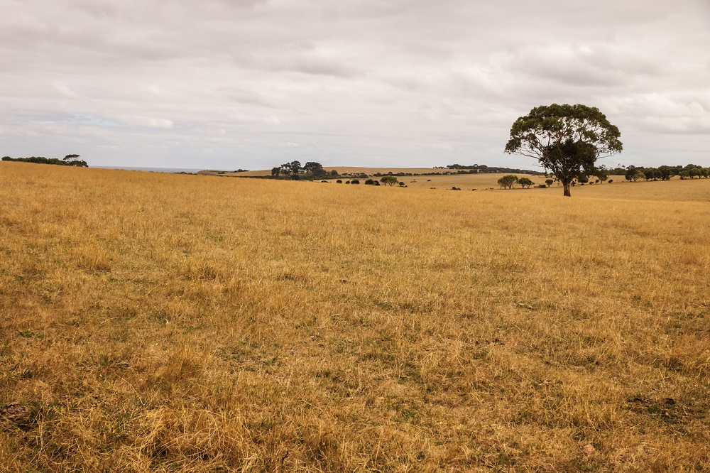 Budget 2021's spend on land reform post-settlement support welcomed