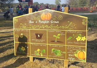 Photo: Learn how a pumpkin grows