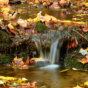 Autumn Healing by Teresa Daines - Nature Up Close Water (  )