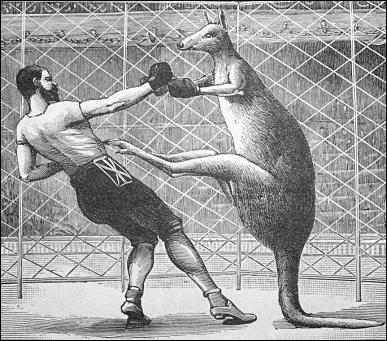 kangaroo_boxing-255B1-255D.png