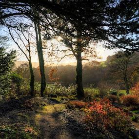 Aberglasney Winter Trees by Simon Eastop - City,  Street & Park  City Parks (  )