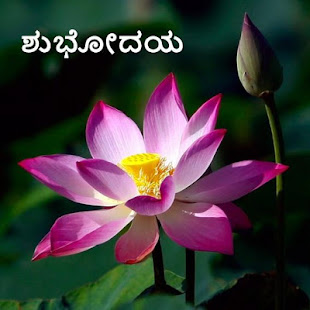 Image Credit Flowers Cheerclics National Flower Lotus Essay In Hindi