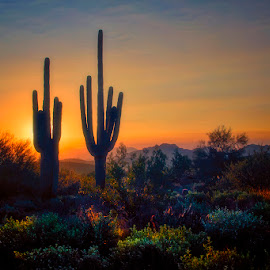 Desert Sunset by Rita Taylor - Landscapes Deserts ( saguaro, night, sunset, desert )