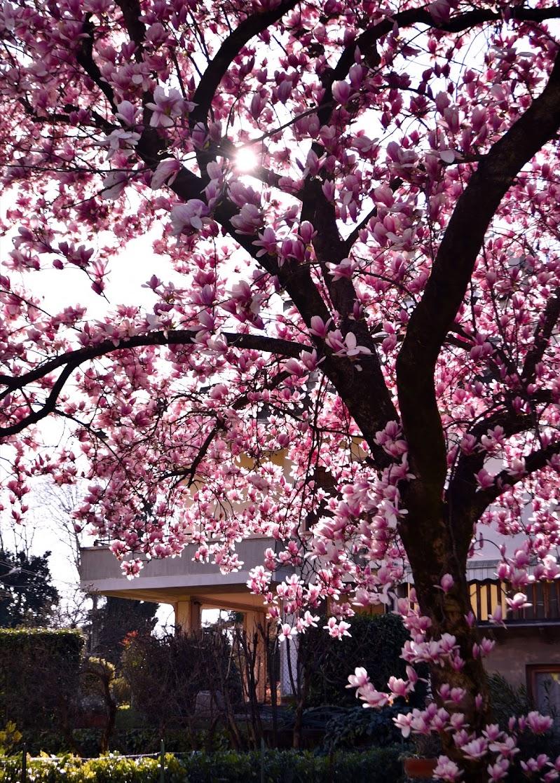 Only Pink  di anna_zaccaria