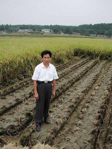 Photo: Liu Zhibin standing in harvested section of SRI field where he combined his innovation of triangular planting with permanent (zero-tillage) raised beds.This yield for this plot was certified by Provincial Department of Agriculture technicians as 13.6 t/ha, which Liu expected to be higher in future years as soil fertility is built up. Liu alternates rice with potatoes on this field, 2004. [Photo by Norman Uphoff]