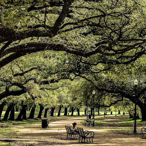 Springtime by Prentiss Findlay - City,  Street & Park  City Parks ( park, trees in park, houston park, park in spring, city park )