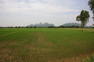 Photo: Day 327 - Rice Fields and Lime Karst Scenery