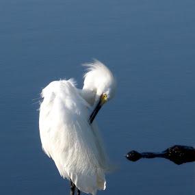 by Terri Schaffer - Animals Birds