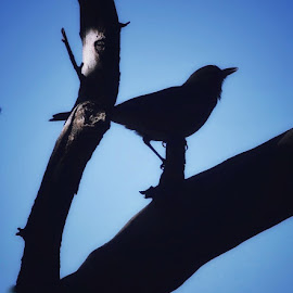 Shadows by Amanda Daly - Novices Only Wildlife