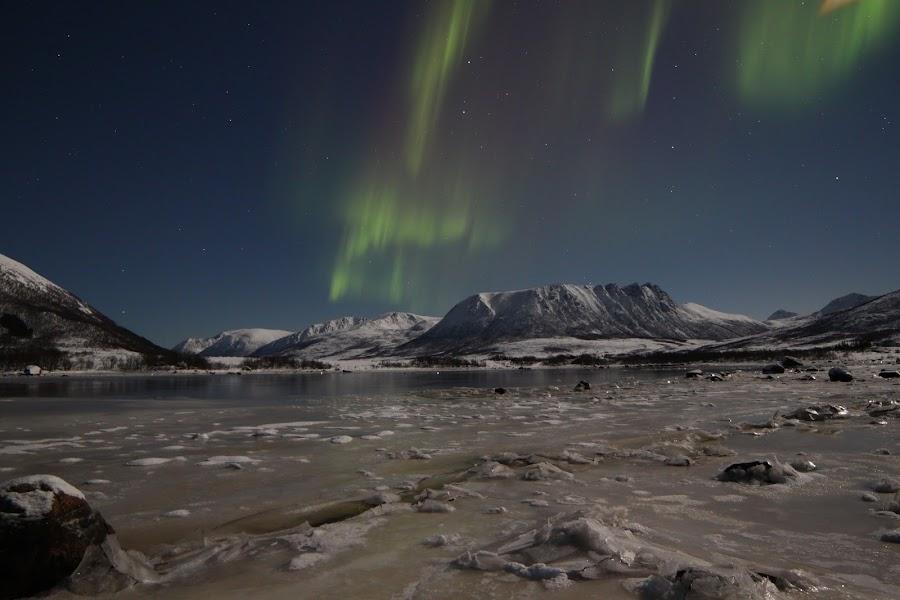 aurora in andøy, Buksnesfjorden by Benny Høynes - Landscapes Starscapes ( nature, ice, buksnesfjorden, aurora, andøy )