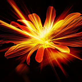 Sparkling by Solomon Aseoche - Digital Art Abstract ( creation, art, digital, spark, flower,  )