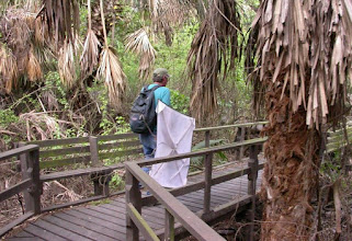 Photo: Hiking out of the Palm Grove.