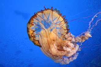 Photo: Sidney - Ocean Discovery Center