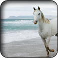 Horse Wallpapers apk