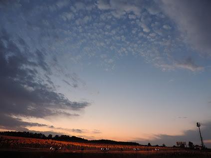 夕景のひまわり畑の空