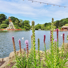 Lake through flowers  by Eloise Rawling - Nature Up Close Water ( park scene, waterscape, lake, flowers )