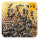 Bees Wallpaper HD New Tab Theme