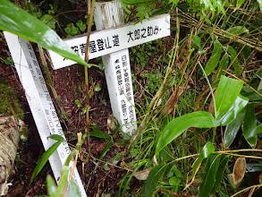 藪の中に道標