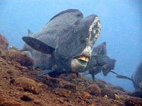 Photo: Зубы огромные, но не страшные