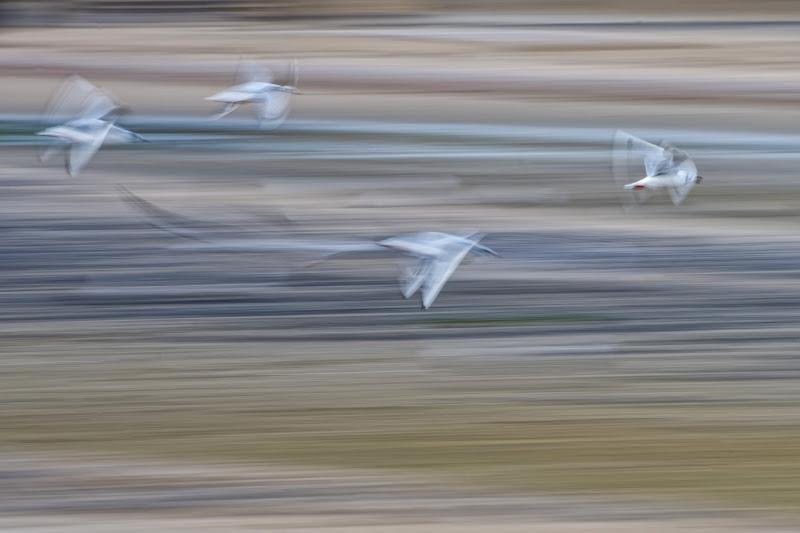 Seagull's Guache di Andrea Izzotti