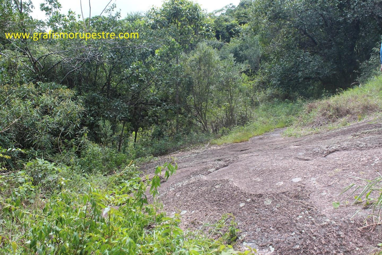 Quando chegar ao lajeado no meio da mata siga em frente pela trilha principal. Agora você está na trilha do Pinheirinho.