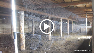 Video: Capture of a challenging bird...the looped recording in the background is a playback bait
