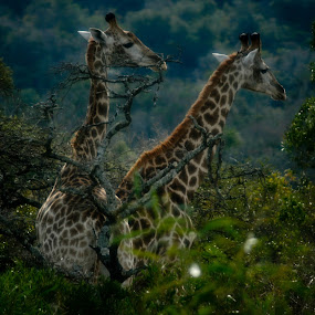 by Ashley Vanley - Animals Other Mammals