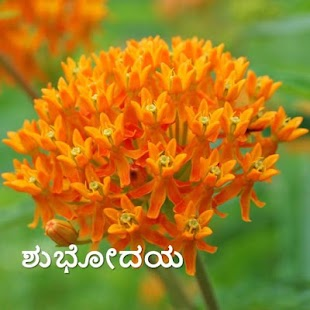 Morning & Night in Kannada - náhled