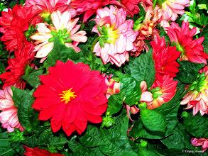 Photo: June 12, 2012 - Technicolor Flowers #creative366project curated by +Jeff Matsuya and +Takahiro Yamamoto #under5k +Creative 366 Project
