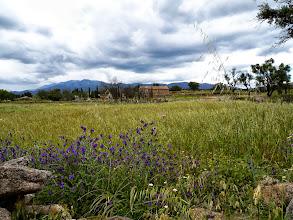 Photo: Paysage champêtre et Bucolique