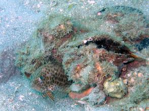 Photo: Honeycomb Grouper