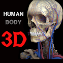 3D Human Body icon