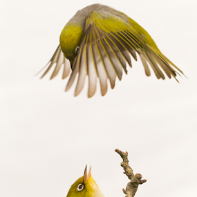Room For Two? by Trevor Bond - Animals Birds (  )