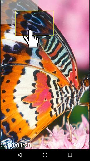 Butterflies brain game
