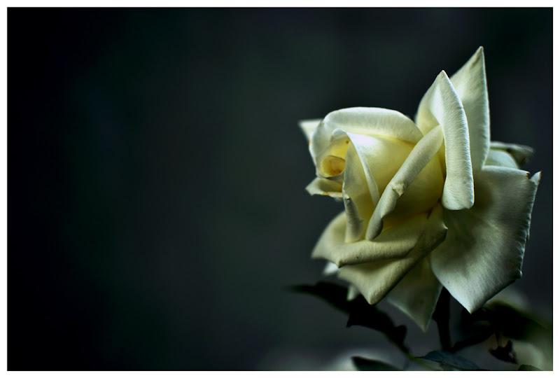 Il buio e l'attesa hanno lo stesso colore. di stella R