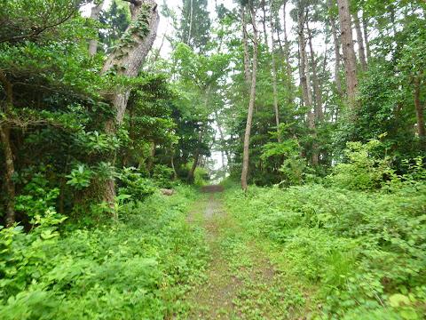 尾崎への道