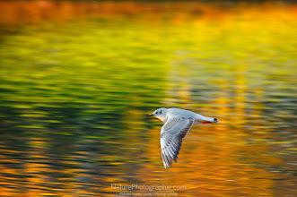 Photo: Free as a Bird