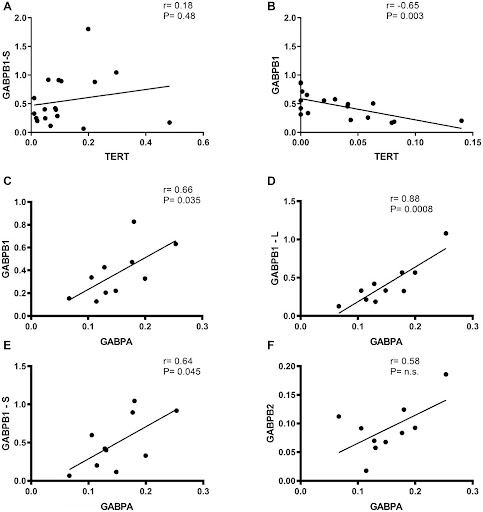 Oncotarget: TERT and its binding protein: overexpression of GABPA/B in gliomas