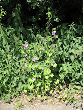 Photo: bush