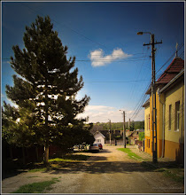 Photo: Conifer - de pe Str. Dorobantilor - 2017.09.08