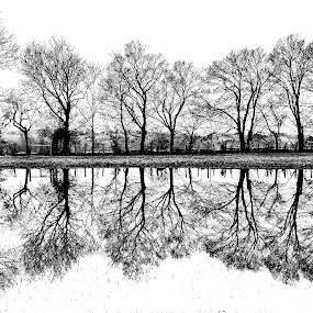 Rural Reflections by Ron Plasencia - Landscapes Prairies, Meadows & Fields ( water, ron plasencia, reflections, trees, black and white, b and w, landscape, b&w, monotone, mono-tone )