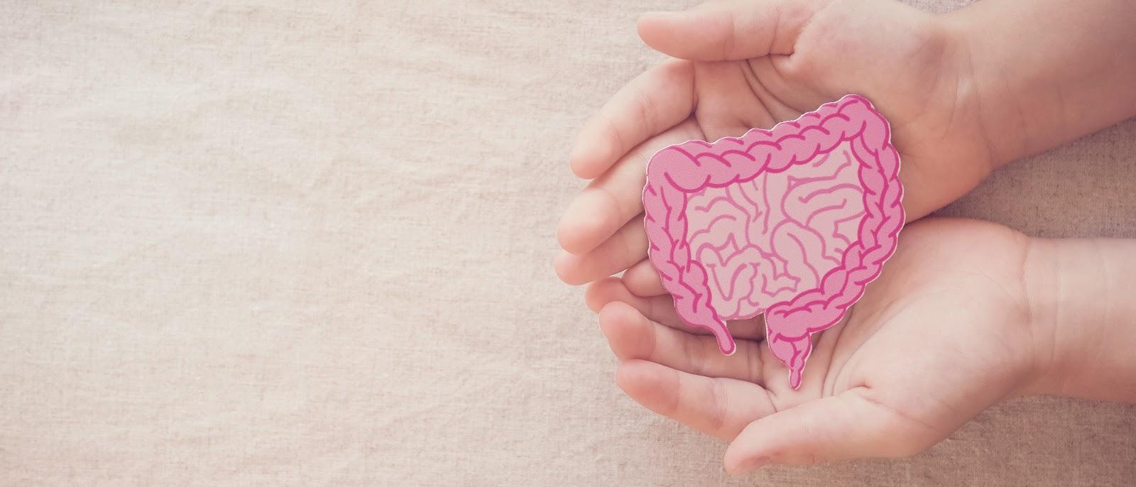 What are probiotics: Hands holding intestine illustration