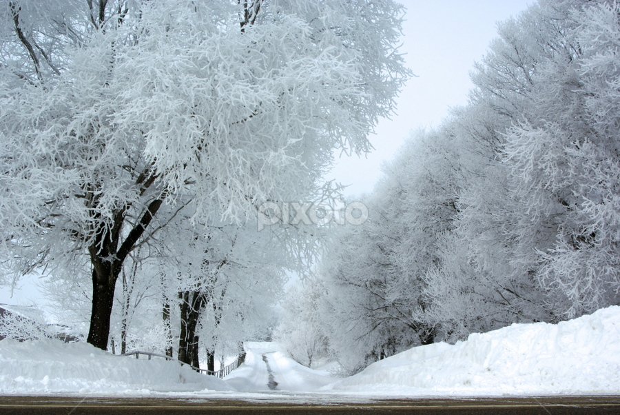 Long Cold Road by Tina Hailey - Landscapes Weather ( snow, road, frosted trees, , white, quality, detail, landscapes, winter, cold )