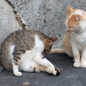 by 冠霖 杜 - Animals - Cats Playing