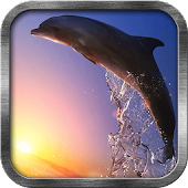 Top Dolphin Live Wallpaper
