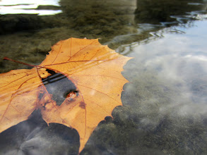 Photo: Orange leave floating in the river at Eastwood Park in Dayton, Ohio.