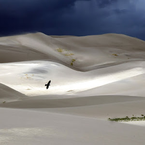 bird-at-dunes.jpg